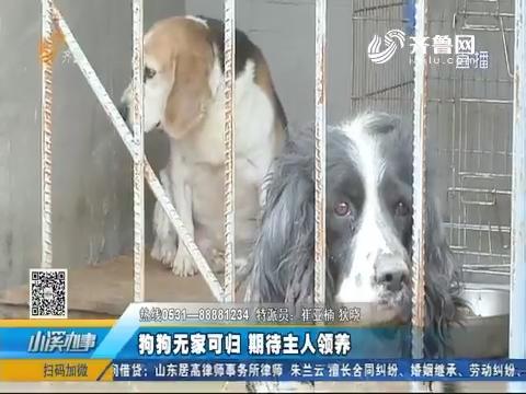 济南:狗狗无家可归 期待主人领养