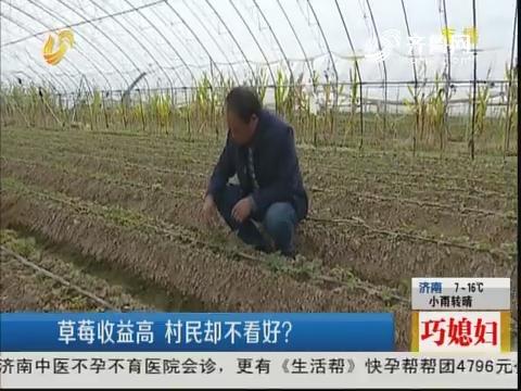 青岛:草莓收益高 村民却不看好?