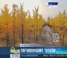 """济南千亩银杏林串起黄河""""生态金项链"""""""