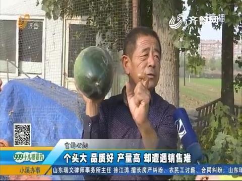 济南:个头大 品质好 产量高 却遭遇销售难