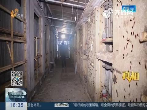 """【真相】3亿只蟑螂的""""美味食堂"""""""