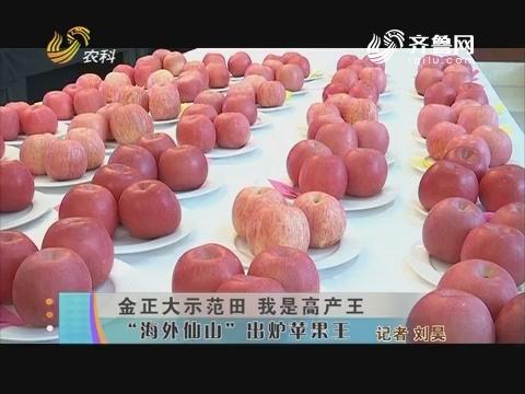 """金正大示范田 我是高产王:""""海外仙山""""出炉苹果王"""