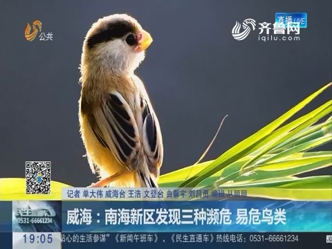 威海:南海新区发现三种濒危 易危鸟类