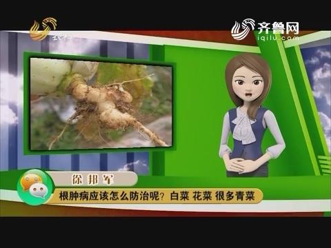 庄稼医院远程会诊:根肿病应该怎么防治呢?白菜 花菜 很多青菜