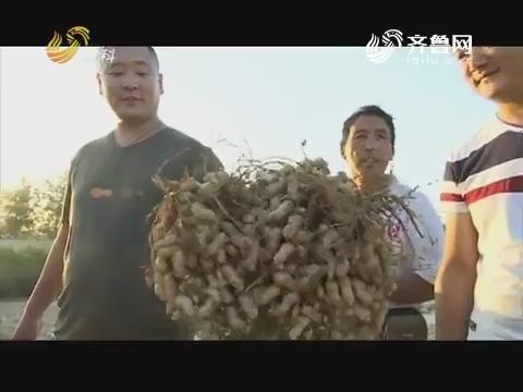 20171121《品牌农资龙虎榜》:莒南——别样的花生大赛