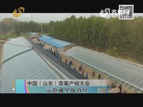 中国(山东)草莓产销大会 示范棚里取真经