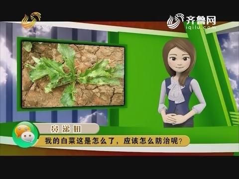 庄稼医院远程会诊:我种的白菜这是怎么了 应该怎么防治呢?