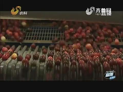 美国蔓越莓之旅(三)全球最大的蔓越莓加工厂