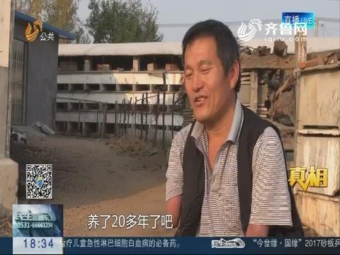 【真相】临沂:独腿农民开办养兔场
