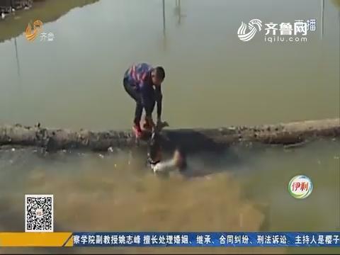 临邑:女子轻生 辅警跳河施救