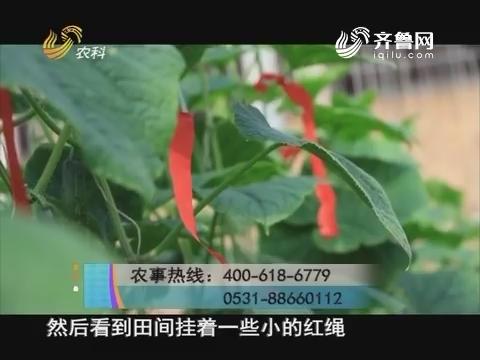 20171125《当前农事》:黄瓜霜霉病