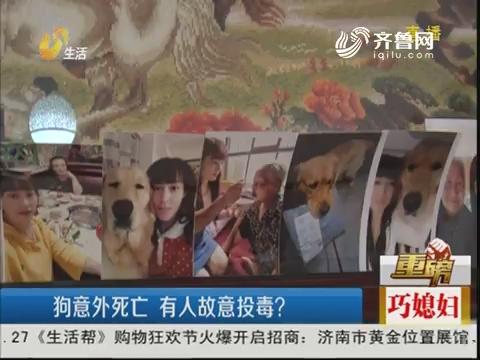 【重磅】淄博:狗意外死亡 有人故意投毒?
