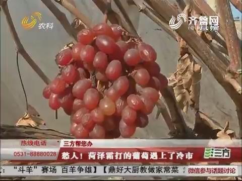 【三方帮您办】愁人!菏泽霜打的葡萄遇上了冷市