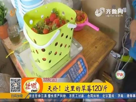 【小家大事】高唐:天价!这里的草莓120/斤