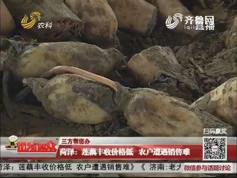 【三方帮您办】菏泽:莲藕丰收价格低 农户遭遇销售难
