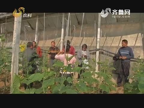 20171128《品牌农资龙虎榜》:济宁——别有洞天的大棚