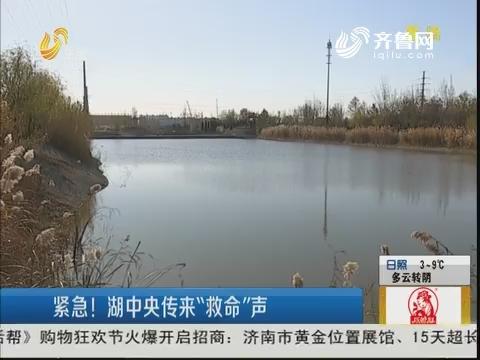 """淄博:紧急!湖中央传来""""救命""""声"""