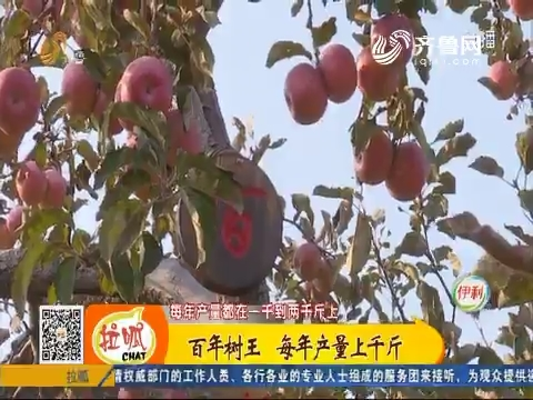 【齐鲁最美乡村】沂源:百年树王 每年产量上千斤