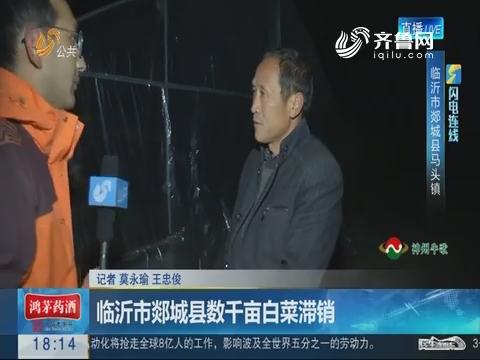 【闪电连线】临沂市郯城县数千亩白菜滞销