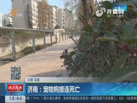 济南:宠物狗接连死亡
