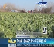 爱心白菜:郯城县马头镇2400万斤白菜等您来买