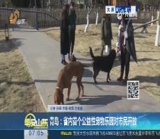 青岛:省内首个公益性宠物乐园对市民开放