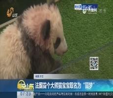 """法国首个大熊猫宝宝取名为""""圆梦"""""""
