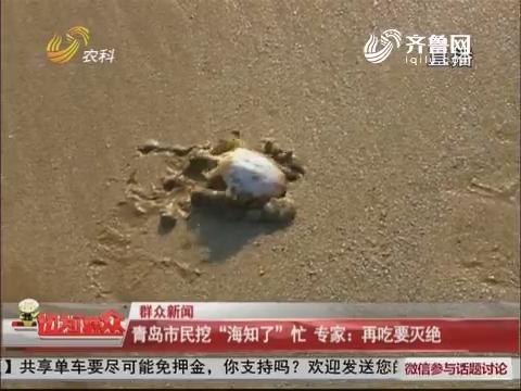 """【群众新闻】青岛市民挖""""海知了""""忙 专家:再吃要灭绝"""
