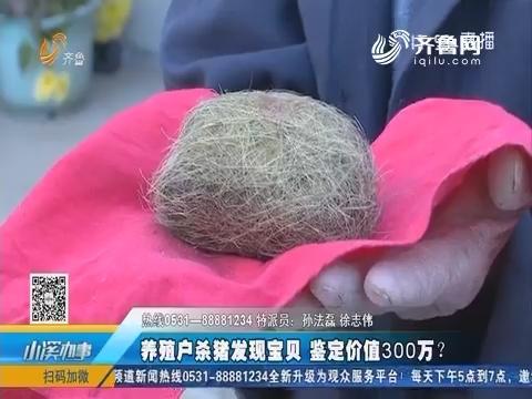 莒县:养殖户杀猪发现宝贝 鉴定价值300万?