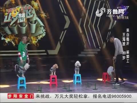 让梦想飞:可爱狗狗上演最萌杂技 流浪小狗才艺惊人