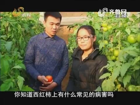 20171208《当前农事》:西红柿晚疫病