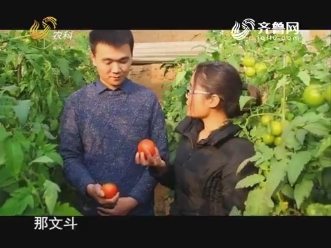 20171209《当前农事》:西红柿晚疫病