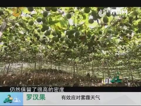 20171209《中国原产递》:罗汉果