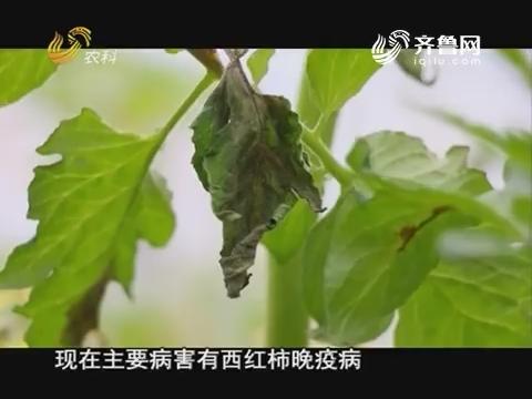 20171210《当前农事》:西红柿晚疫病