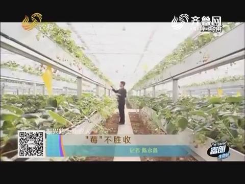 """【振兴路上新农人】""""莓""""不胜收"""