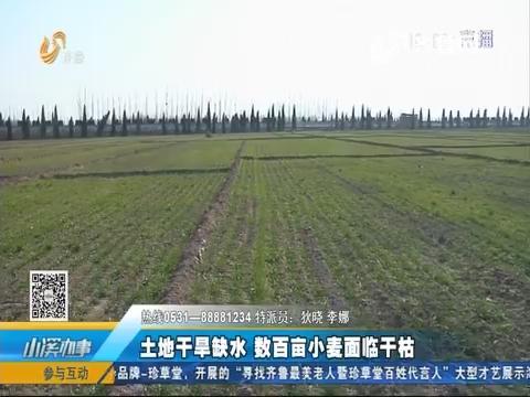 齐河:土地干旱缺水 数百亩小麦面临干枯