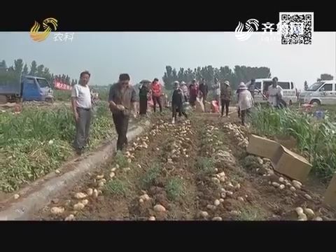 土豆吃紫牛 吃成抢手货