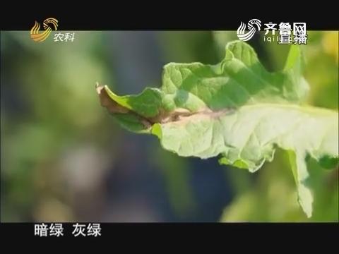 20171213《当前农事》:西红柿晚疫病