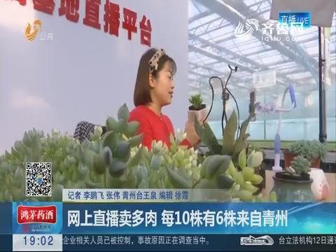 网上直播卖多肉 每10株有6株来自青州