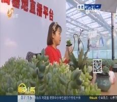 潍坊:网上直播卖多肉 每10株有6株来自青州