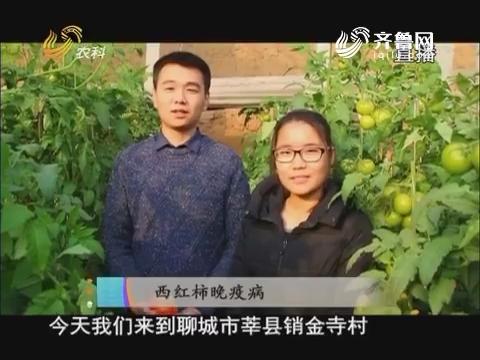 20171214《当前农事》:西红柿晚疫病