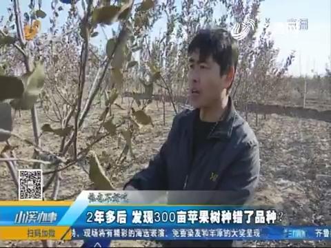 德州:2年多后 发现300亩苹果树种错了品种?