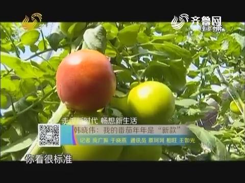 """【走进新时代 畅想新生活】韩晓伟:我的番茄年年是""""新款"""""""