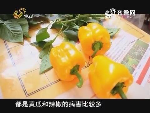 20171216《当前农事》:中澳益宇冬棚送暖