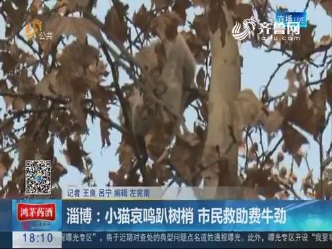 淄博:小猫哀鸣趴树梢 市民救助费牛劲