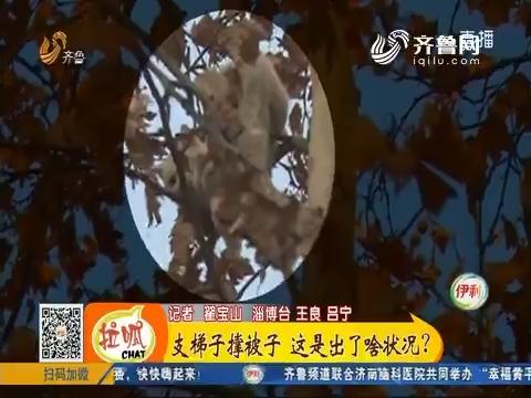 淄博:支梯子撑被子 这是出了啥状况?