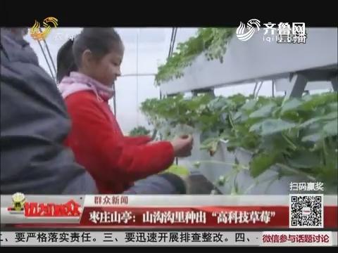 """【群众新闻】枣庄山亭:山沟沟里种出""""高科技草莓"""""""