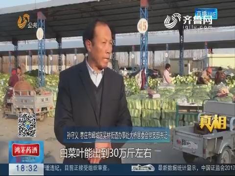 【真相】枣庄:废弃白菜叶 进了回收站