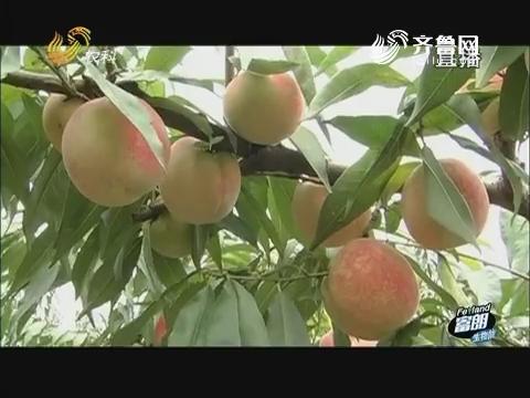 姜全:桃产业升级 省力是关键