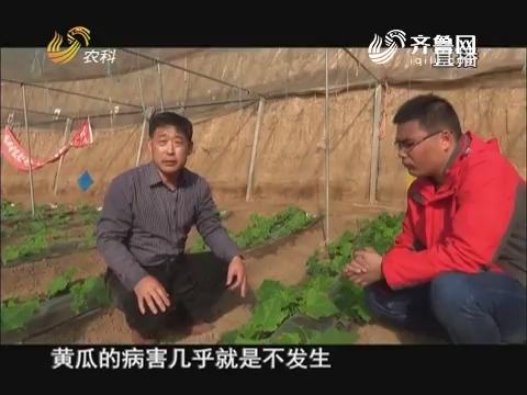 20171218《当前农事》:黄瓜管理